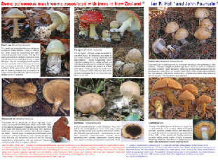 Will Dogs Eat Poisonous Mushrooms